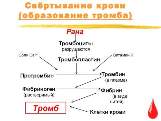 Схема процесса свертывания крови
