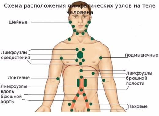 Схема расположения поверхностных лимфоузлов