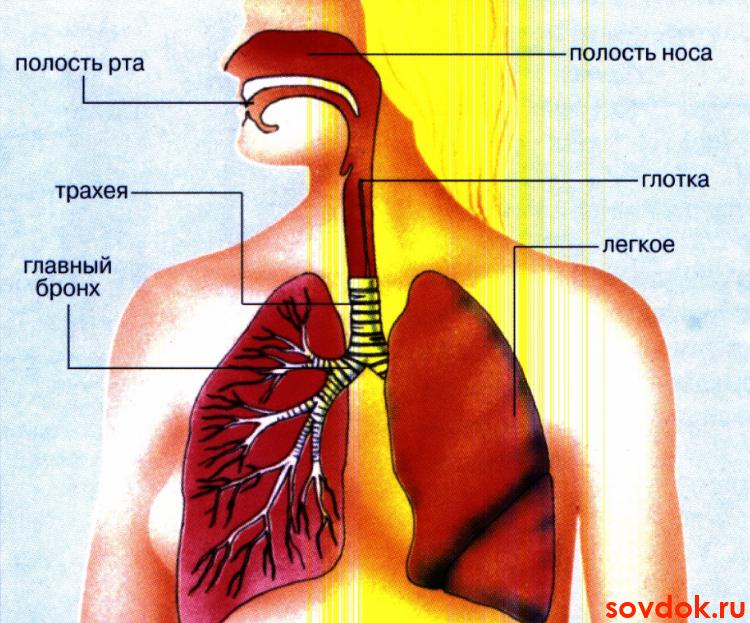 Острый бронхит - причины, симптомы, диагностика и лечение