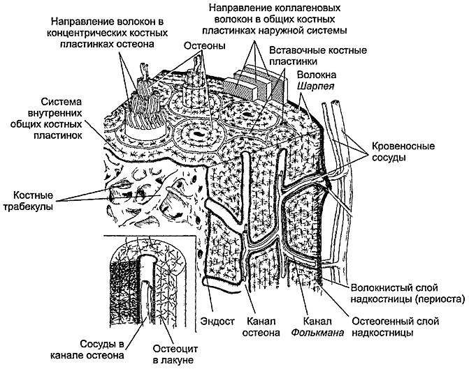 Ушиб колена: лечение в домашних условиях, оказание первой