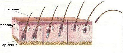 Выпадение ресниц и бровей у мужчин, женщин и детей: причины и лечение
