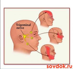 топология иннервации тройничным нервом