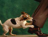 Укус собаки: насколько это опасно?