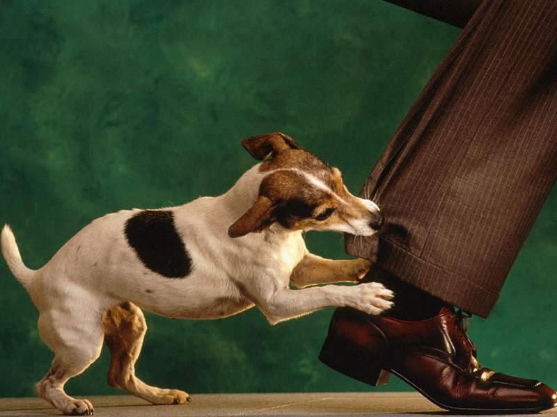 Укус собаки: что следует знать
