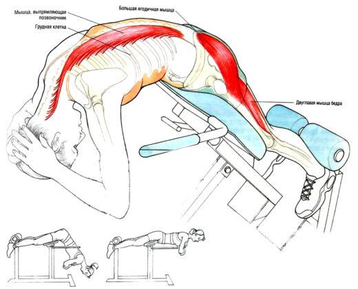 Техника выполнения упражнений для спины