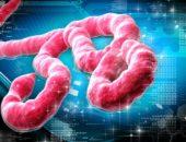 Вирус геморрагической лихорадки Эбола