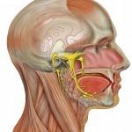 Невралгия тройничного нерва: кратко о симптомах и лечении