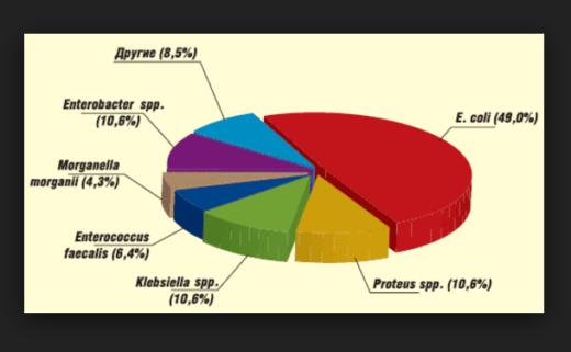 Возбудители пиелонефрита (схема)