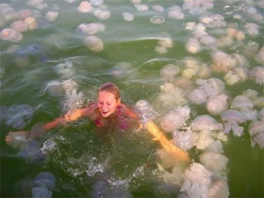 Встреча с медузами