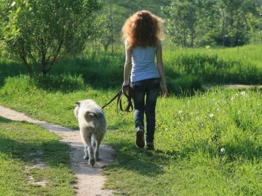 Человек гуляет с собакой