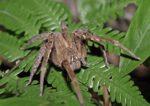 паук на листьях